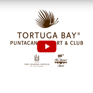Tortuga nuevo Video Gallery